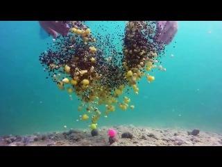 Sazan balığı kruçoğa necə düşür Su altı çəkiliş (Balıqçilar klubu)