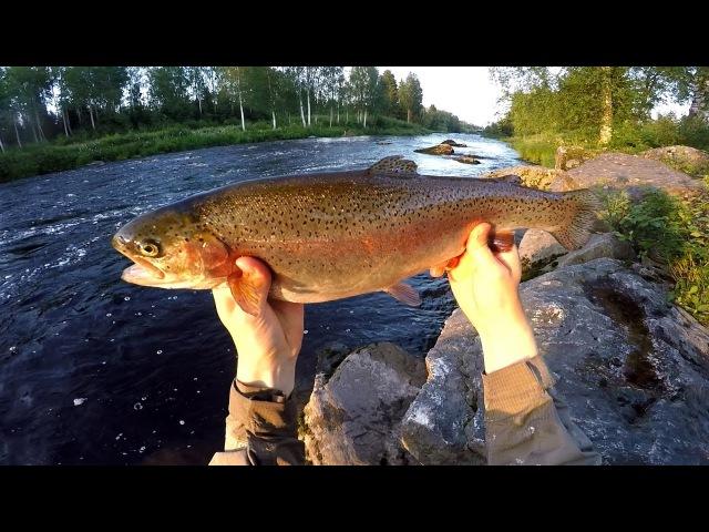 Kirjolohen kalastusta joella | Rainbow trout river fishing
