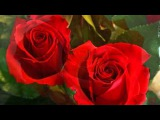 A Beautiful Rose For A Beautiful Person ! - Music Acker Bilk ( Ramblin' Rose )