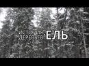 Ель. История деревьев - Новогодний выпуск