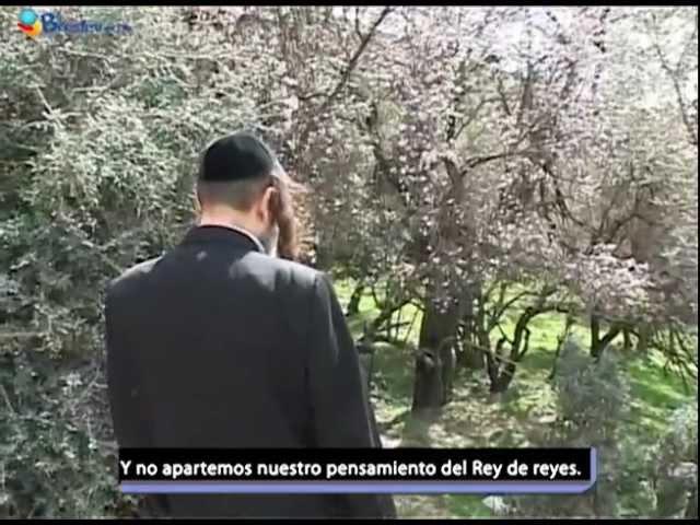 La Plegaria Personal / Rabino Shalom Arush
