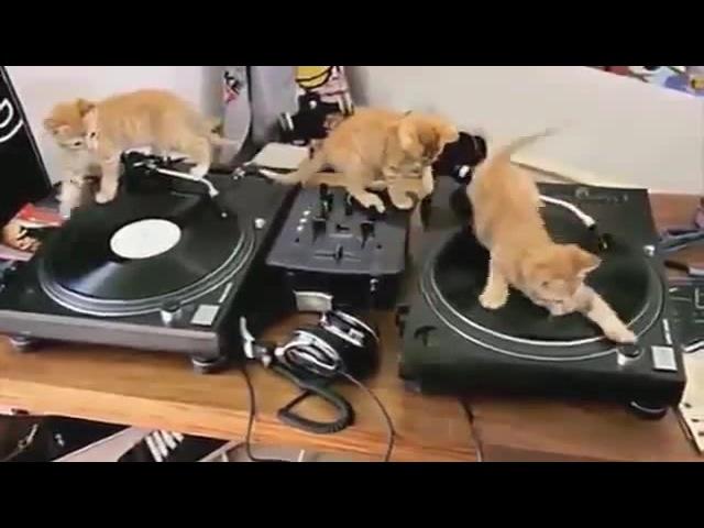 Cats DJs