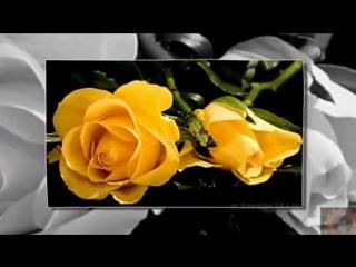 # Мокнут розы под дождем - гр САДко #