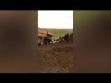 В Сети появилось видео, как стадо коров вывалили из самосвал