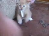 отучить кота от курения