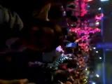 Club Inferno Кемер
