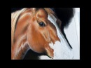 Quarter Horse Pastel Demonstration by Roby Baer PSA