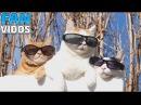 Смешные кошки и коты 2017.Приколы с котами и кошками для вашего настроения ! Смешные коты 11