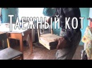 «Таежный кот» / Тайга моя заветная / 09.06.2016