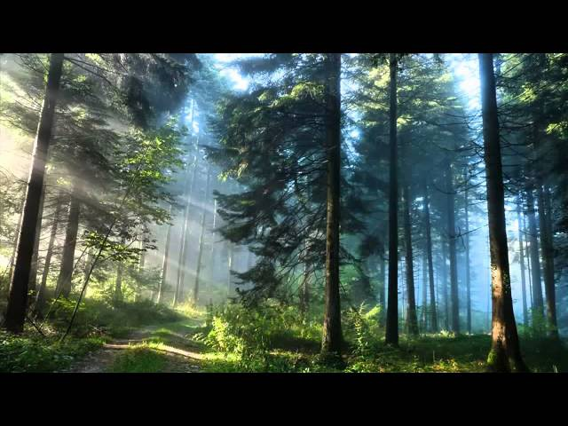 3 ЧАСА расслабляющей фоновой музыки Тихая медленная музыка Медитация Сон учёба Спа
