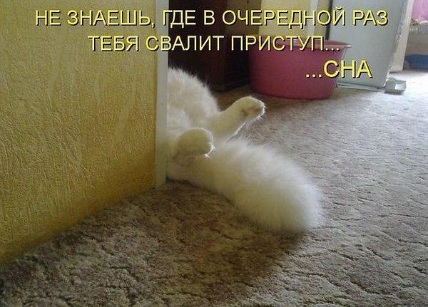 https://pp.vk.me/c636829/v636829244/11d93/nMRNUoY2kUY.jpg