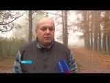 В поселке Максимовка бродячие собаки нападают на школьников