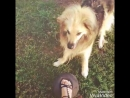 мой самый самый любимый пёс 🐶 любимка лапамоя люблю💙💚💛💜