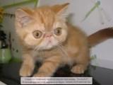 Котёнок Артёмка, гр. Колыма