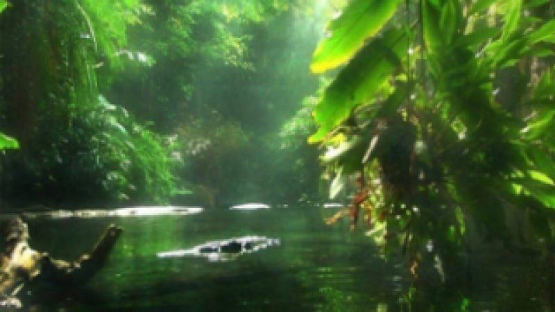 Амазонка. Колыбель жизни. Дикий мир. Документальный фильм National Geographic.