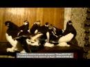 Русские статные голуби февраль 2016