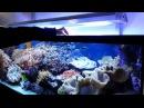 JBL Meerwasser Aquarium im Konferenzzimmer Teil 2 - Fütterung mit PlanktonPur