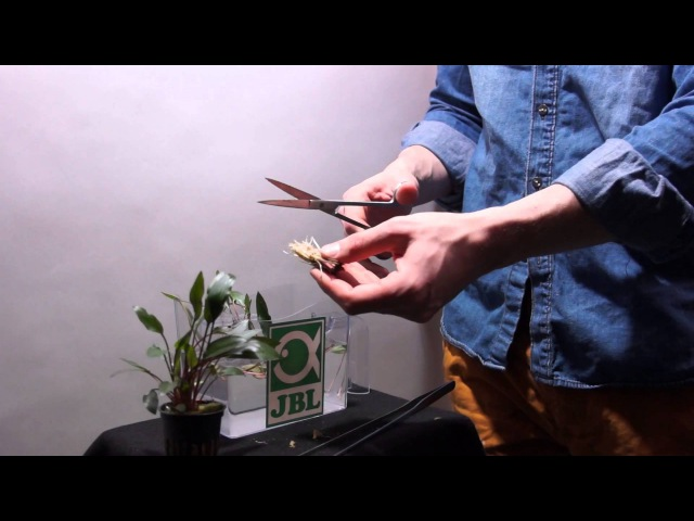 ProScape Tools - Pflanzen vorbereiten und bearbeiten