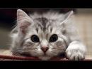 ●ПРИКОЛЫ С КОШКАМИ● Видео приколы про кошек, Приколы про кошек до слез видео, Пр...