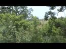 Момент наступления войск ополчения в районе с Кожевня 22 07 2014