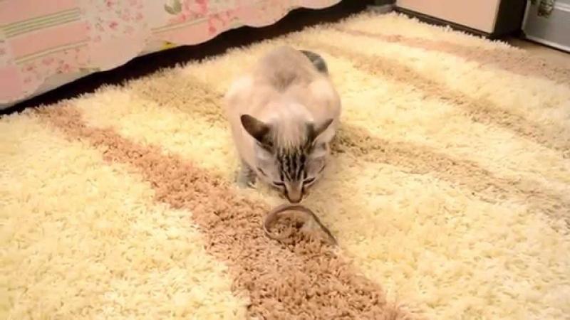 Мой новый мохнатый ковер))Обзор помогает вести кот Марик!
