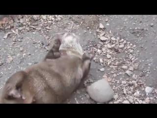 Милый жонглер