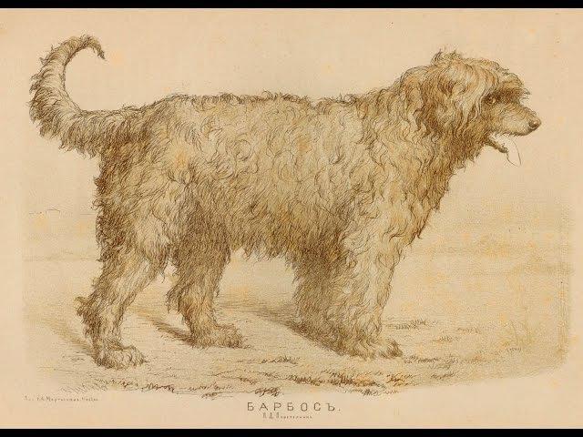 Русская Южнорусская овчарка 1880 2015