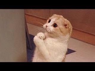 Эти забавные кошки. Понраивлось видео ? Поделись с друзьями.
