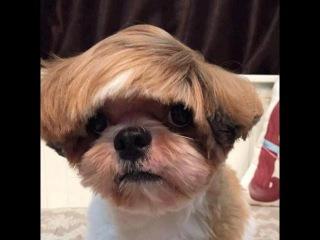 Piores tosas e penteados em cães e gatos