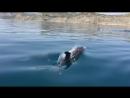 #Крым: Дельфины в районе Коктебеля! 🐬