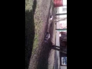 Одноглазая кошка с маминого двора на Кирова.