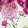 Ботаническая иллюстрация акварелью(для новичков)