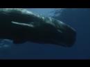 Королевство океанов. 4. Между Сушей и Морем 2011