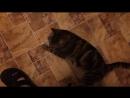 Кот и таблетка валерьянки