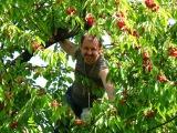 Band ODESSA  Поспели вишни в салу у дядя Вани  Популярная дворовая песня новинка 2017
