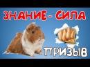 🐹 Сделаем жизнь свинок лучше 👊👊Информация сила