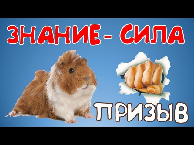 🐹 Сделаем жизнь свинок лучше👊👊Информация-сила!