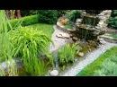 Проверено прозрачная вода в садовом пруду реальность