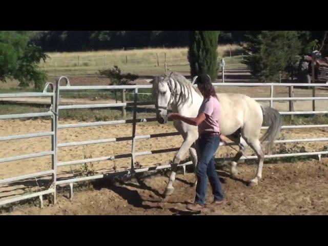 Уроки с Фредериком Пиньоном и жеребцом Quiproco, июнь 2016