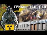 Грибы - Тает Лёд (Пародия By Show Prank TV)