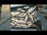 Зимняя рыбалка. Весна. Ладожское озеро река Свирь. Бешенный клев Окуня на балансир