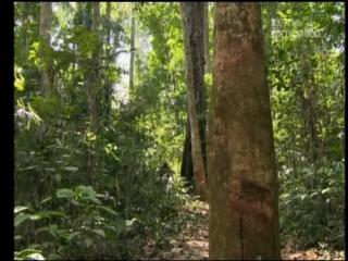 Амазония - 5 серия