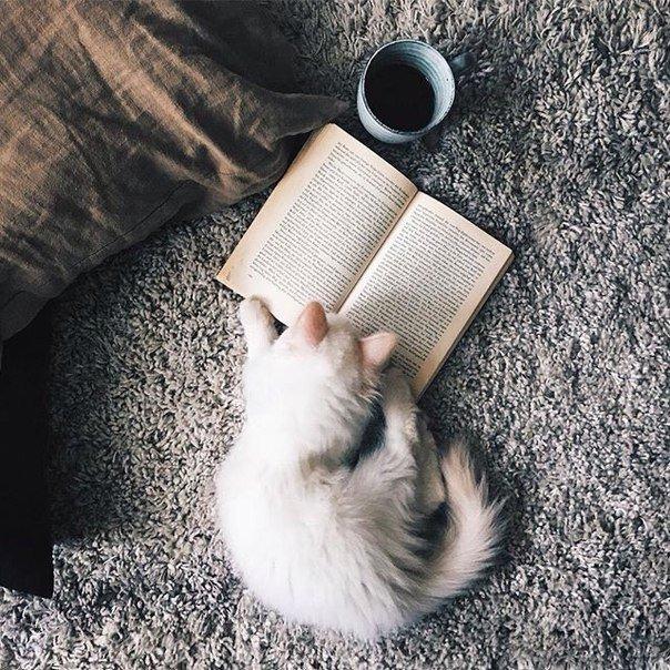 Если вы проснулись с плохим настроением, по дороге на работу или на учебу откройте хорошую книгу.