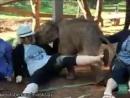 слоняра прыкол