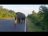 Девочка объяснила слону, что на дороге опасно!