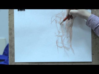 Рисунок и построение торса человека