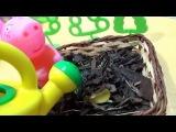 Свинка Пеппа. Мармеладное дерево. Новая серия из игрушекpeppa pig. marmalade tree