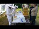 Näyttötutkintotilaisuus Mustialassa kesällä 2014 Kolmas vuosikurssi Osio mehiläistarhaus