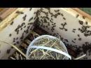 Karmienie pszczół