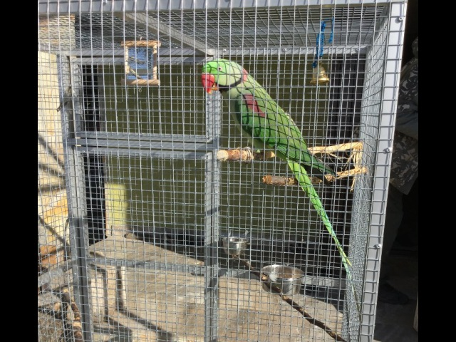 Клетка для александрийского попугая. Размер 1,5 х 0,9 х 0,6м